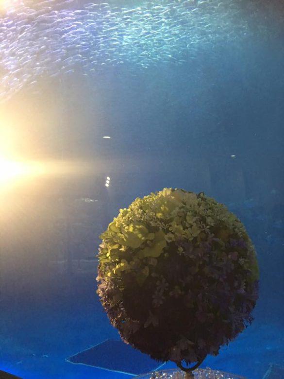 名古屋港水族館におけるイベント写真.jpg3