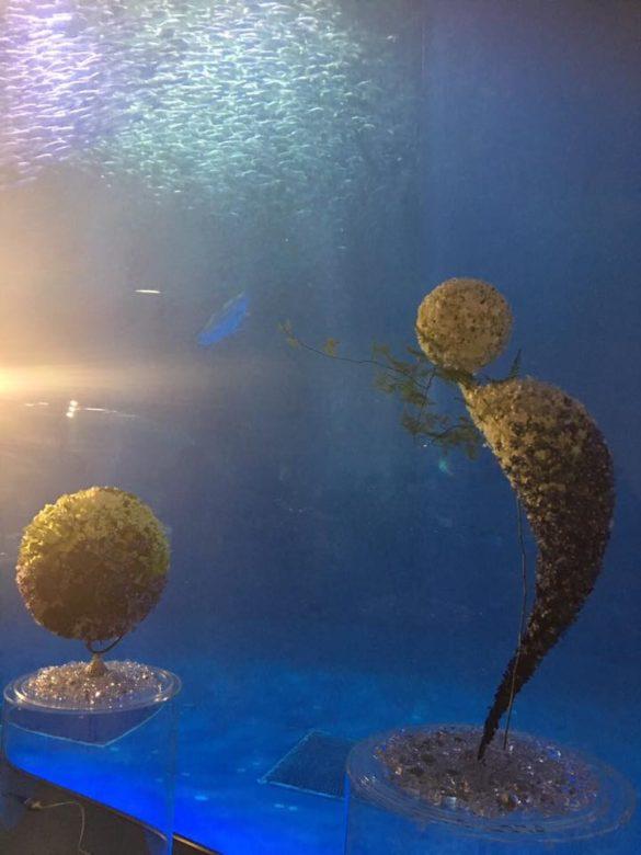 名古屋港水族館におけるイベント写真.jpg2